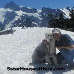 Housesit petsit with English sheep dog visiting Mt. Baker