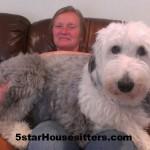 Housesit petsit with old English Sheep Dog in Seattle, WA