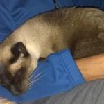 SidneySleeping