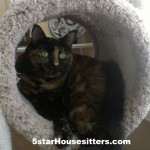 Housesit and petsit in California with cats