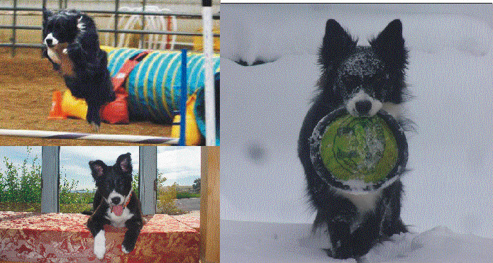 Housesitting and petsitting adventure started with our border collie in Golden, CO