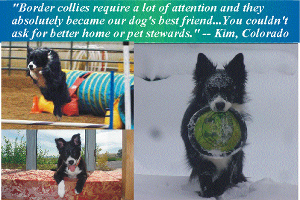 Our housesitting and petsitting journey started with our border collie in Golden, CO