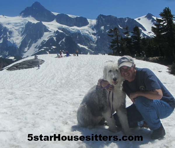 Housesit petsit with English sheep dog visiting Mt. Baker