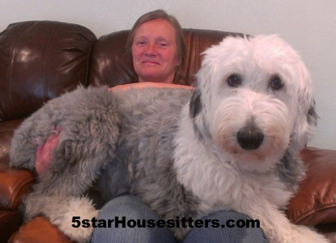 Housesit petsit with old English Sheep Dog in Seattle, WA