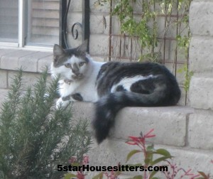 Housesitter and petsitter engagement caring for Vera