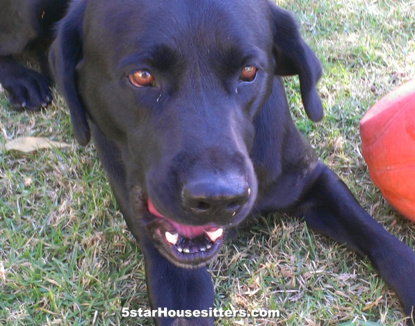 Extended stay pet care for black lab in Southern California