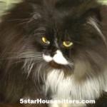 Housesit and petsit a full house of cats near Santa Monica