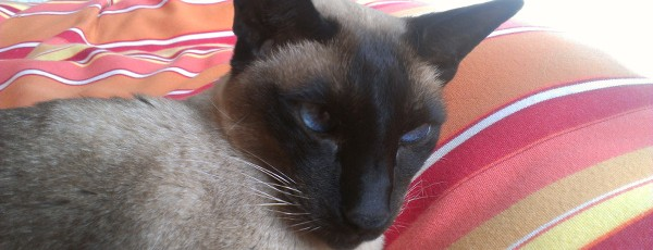 Hospice cat care in Cape Cod