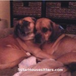 puggles get the in home dog boarding alternative while their parents are away