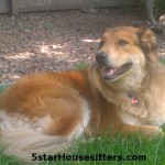 Long term house sitting and dog sitting Amstel in Colorado