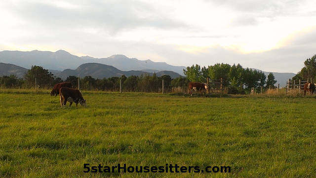Durango house sitting dog sitting and cat care