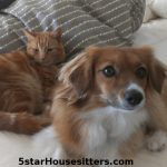 Coco Mixed Breed Dog sitting and orange tabby cat care
