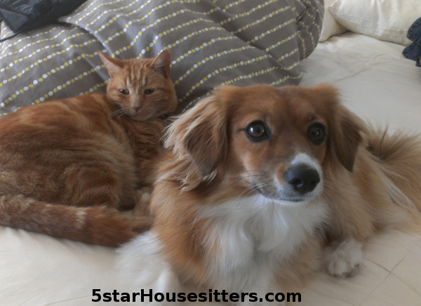 Mixed breed dogsitting and orange tabby cat care in Monterey