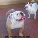 Dog_Sitting_English_Bulldog_Santa_Fe