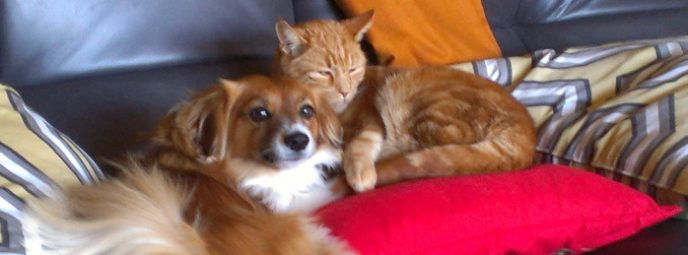 Dog sitting and Orange Tabby Cat Care in Monterey