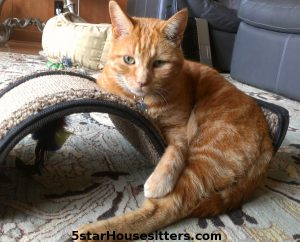 Lulu Cat Care for Orange Tabby in Monterey