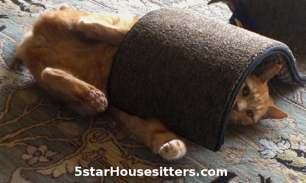 Orange Tabby Cat Care in Monterey