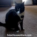 C at care for tuxedo cat in Southern California