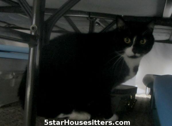 Cat Care for Tuxedo Cat hiding under bed