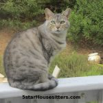 Sedona Cat Care for Silver Bengal on Porch