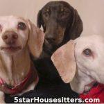 Bubba Lucy Big Daddy Dog Sitting Wiener Dogs